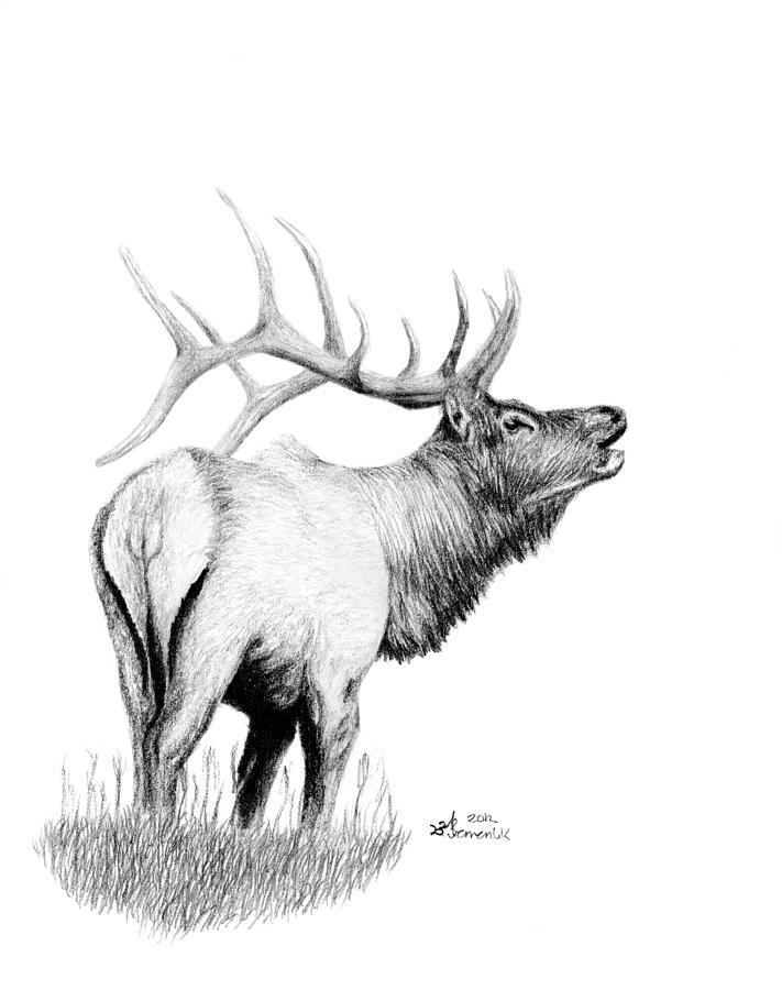 Drawn hunting elk antler Drawing Kayleigh Hunters Semeniuk Hunters
