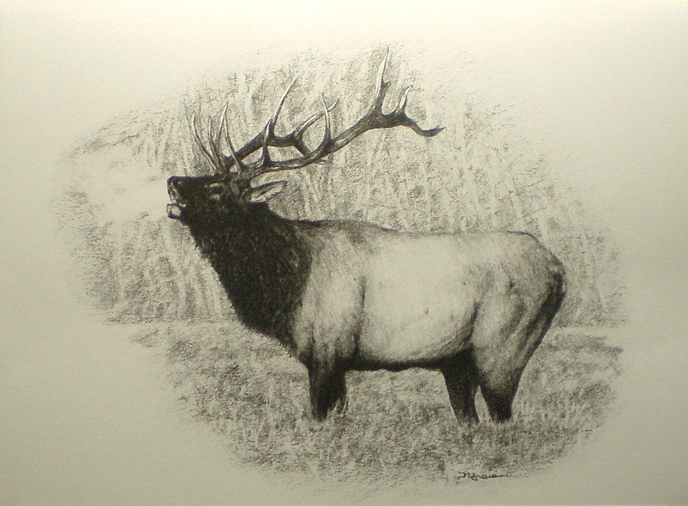 Drawn hunting elk antler White Card Elk Elk Hunting