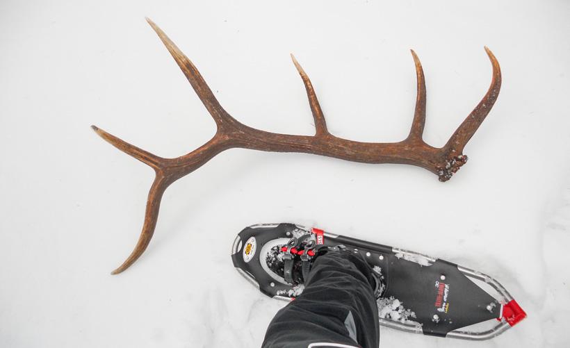 Drawn hunting elk antler GoHUNT hunting Hunting Hunting laws