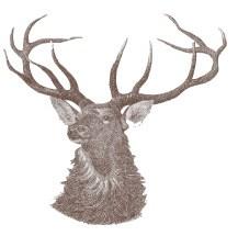 Drawn hunting elk antler 2012: guide Morrigan's Hunt hunting