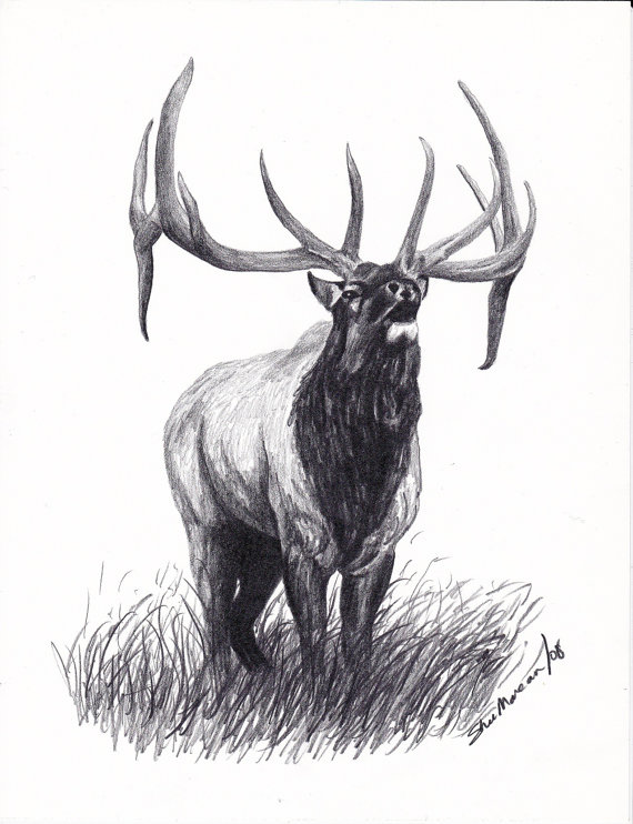 Drawn hunting elk antler SheriMareanArtist 99 Elk drawing Black