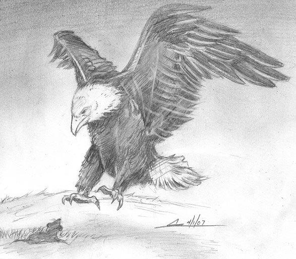 Drawn hawk hunter Ideas on Pinterest Eagle John