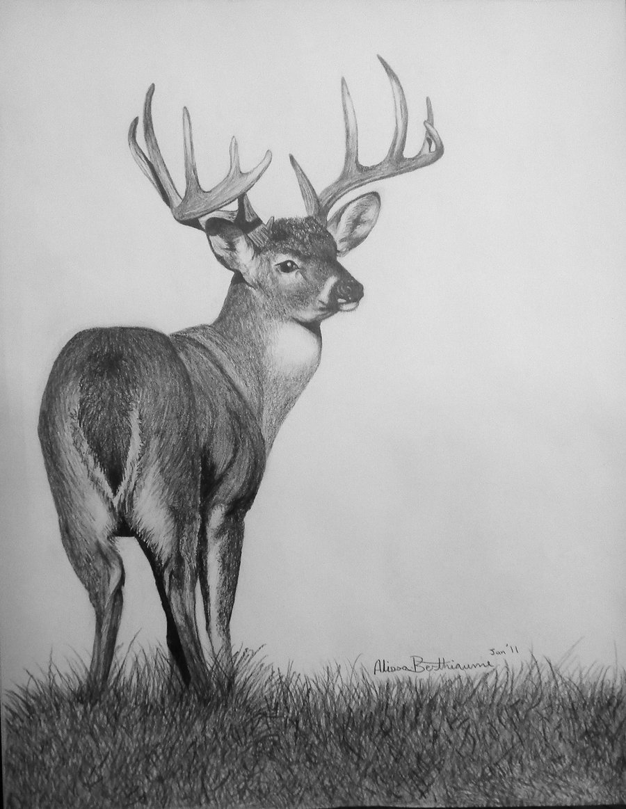 Drawn hunting whitetail deer The on by Just deerhunter2012