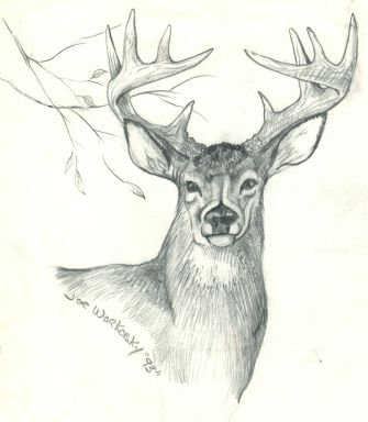 Drawn hunting whitetail deer Of on 974 Search images