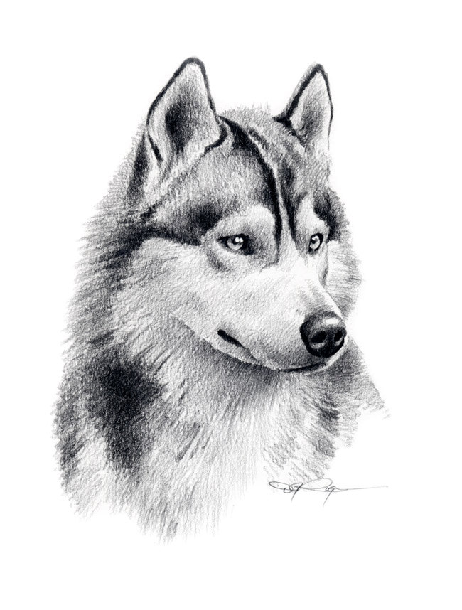 Drawn animal husky #2