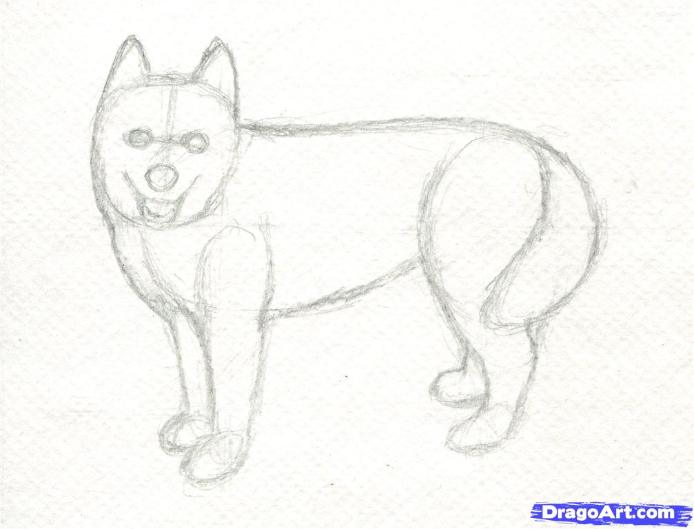 Drawn husky To by  step Step