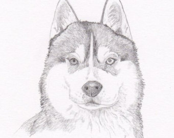 Drawn husky Print drawing Drawing Husky Free