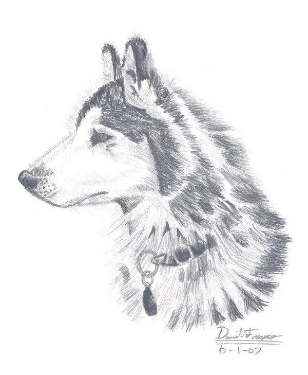 Drawn husky DeviantArt by Husky by Husky