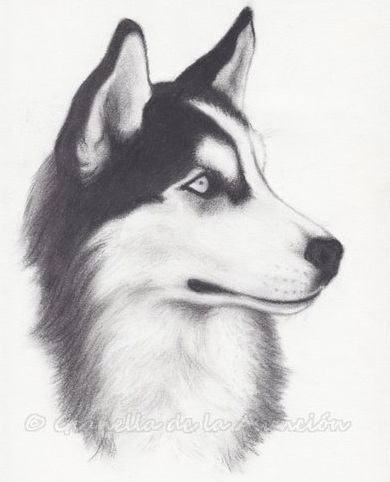 Drawn husky  Husky and Siberian Cheeky