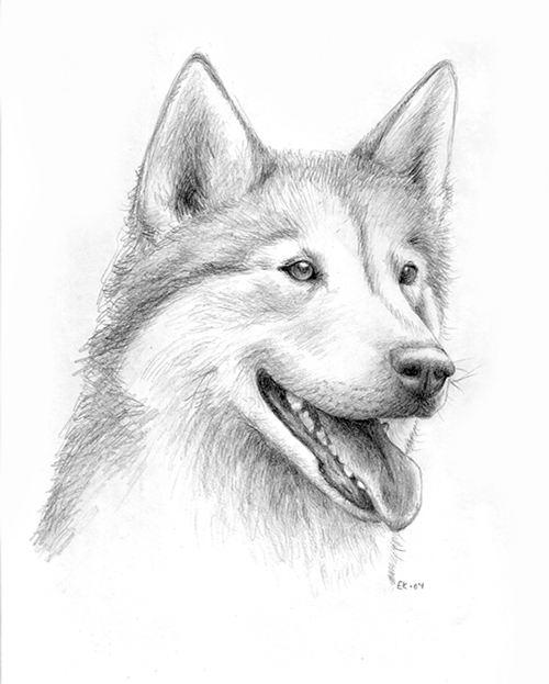 Drawn husky Drawing Husky Husky Art Sketch