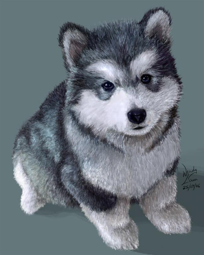 Drawn husky adorable Puppy hammy by DeviantArt Husky