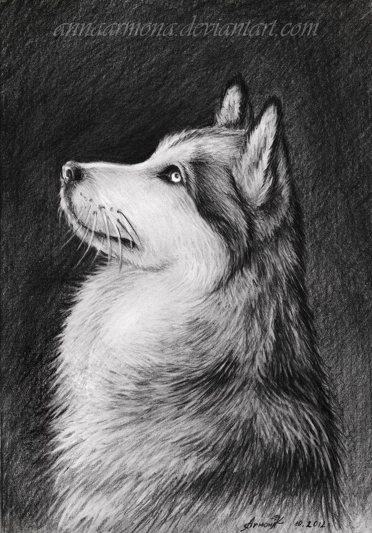 Drawn husky awesome dog Find Siberian 48 dream Husky