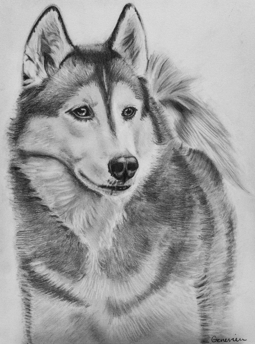 Drawn husky awesome dog Siberian Pinterest tattoos Google Search