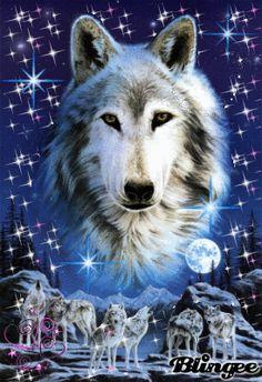 Drawn husky blingee Tags Blingee blingee wolves wolves