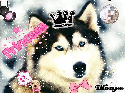Drawn husky blingee Graphics cute Glitter best Pinterest