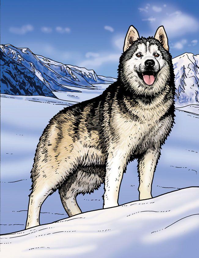 Drawn husky demon dog From com 39 Siberian Husky