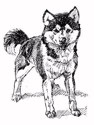 Drawn husky demon dog Present: Z 1956 Halley Dog