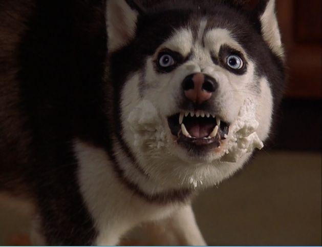 Drawn husky demon dog To Buy from Demon Snow