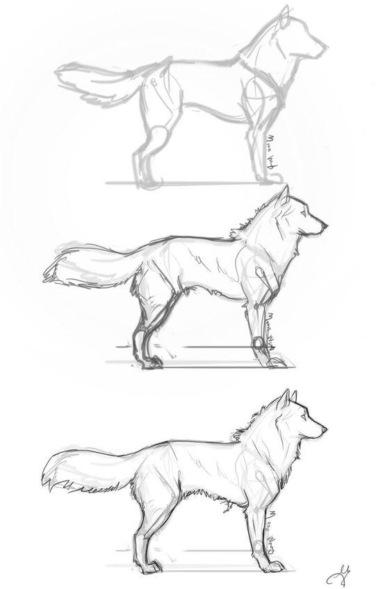 Drawn husky fluffy dog Step of whisperpntr The catalog