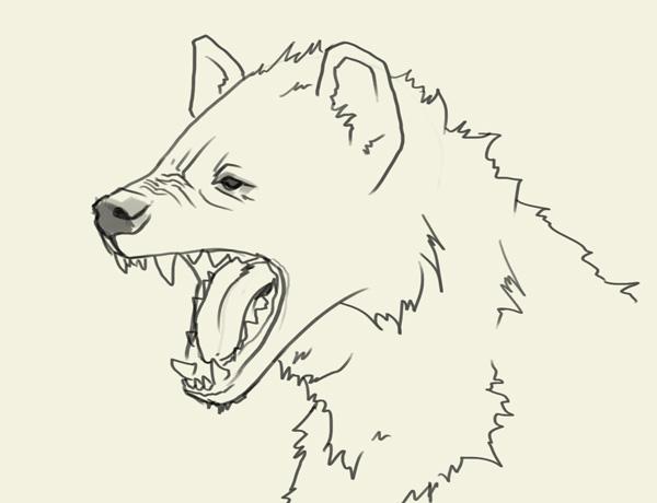 Drawn hyena Head if hyena (700×804) story