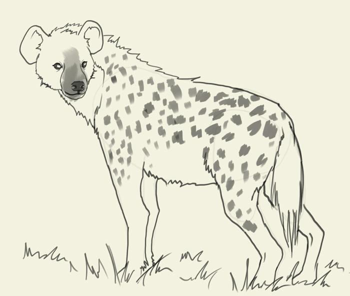 Drawn hyena Online tutorials Archives drawing animals