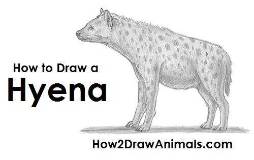 Drawn hyena To Hyena How Draw Draw