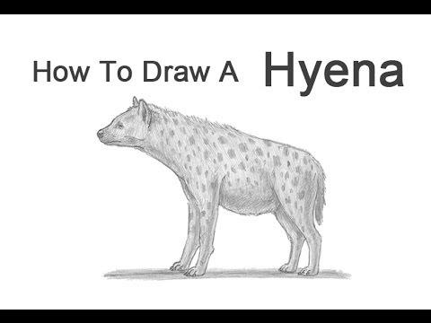 Drawn hyena Hyena a a to Draw