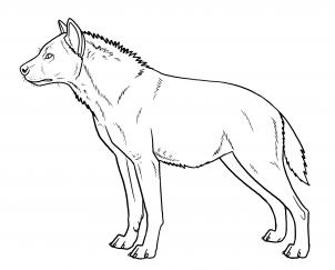 Drawn hyena Hyenas animals Draw by safari