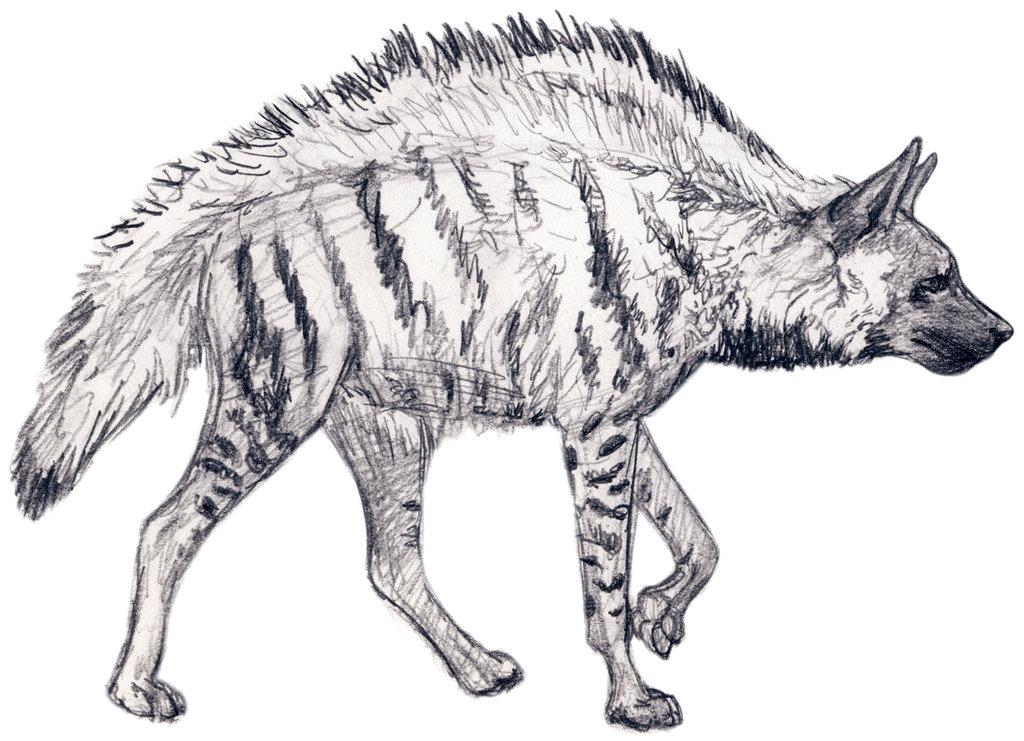 Drawn hyena Silvercrossfox by DeviantArt by Hyena