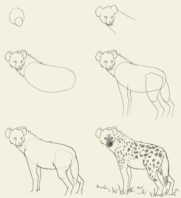 Drawn hyena Draw how Hyena Drawings and