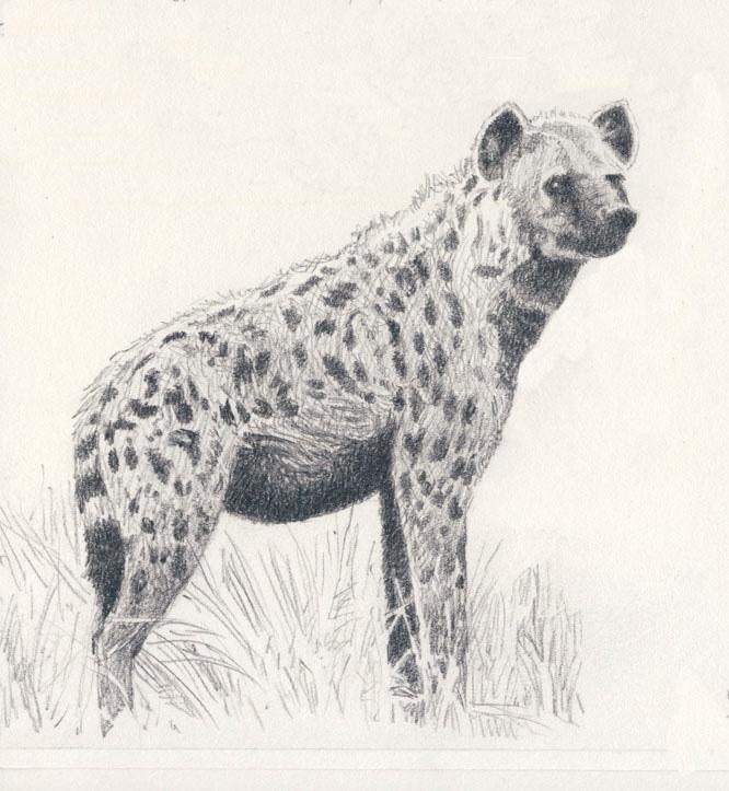 Drawn hyena DeviantArt on WillemSvdMerwe Hyena by