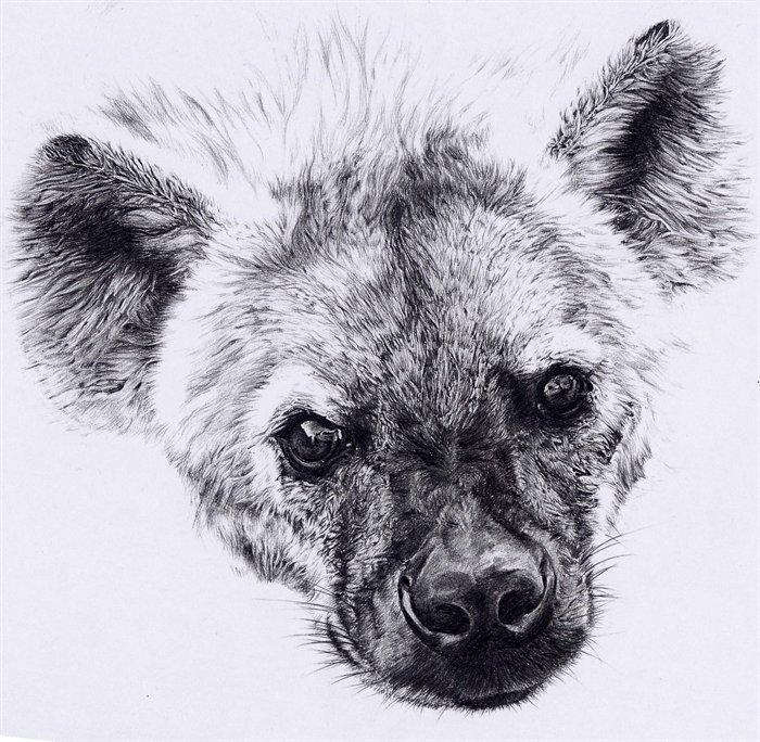 Drawn hyena & and Pets Pinterest Tattoo