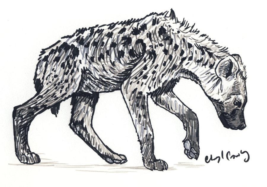 Drawn hyena DeviantArt on by Spotted Hyena