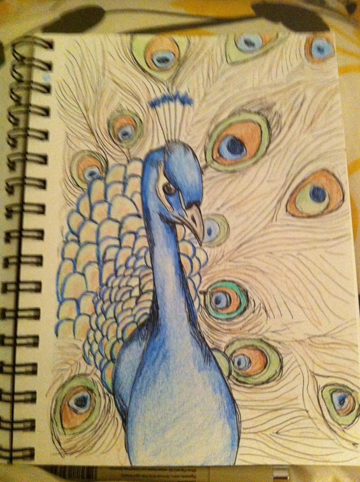 Peacock clipart front view The art drawing Peacock ideas