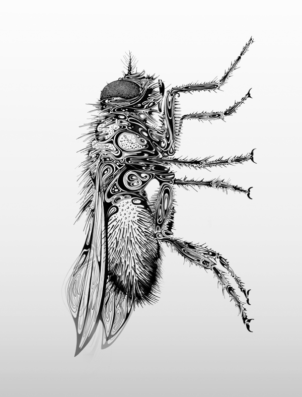Drawn insect #3