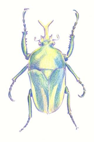 Drawn bugs scarab beetle A 4 Draw Beetle Beetle:
