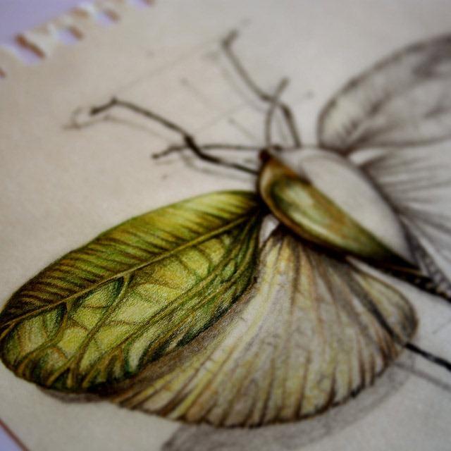 Drawn bug entomology Paula Illustrations Drawings Detailed Beautifully