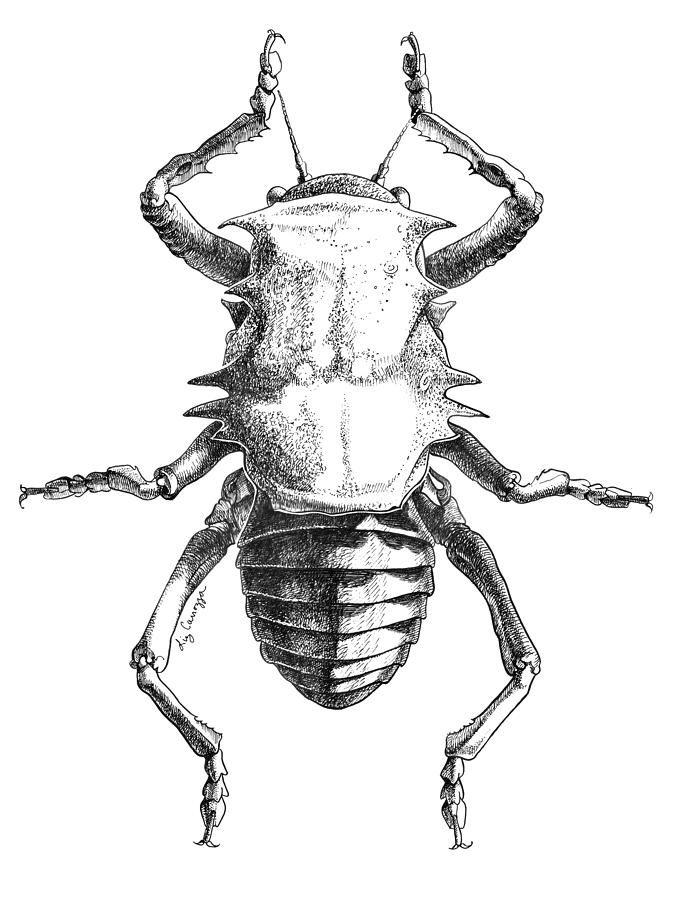 Drawn bug entomology On carrozza best 58 (677×