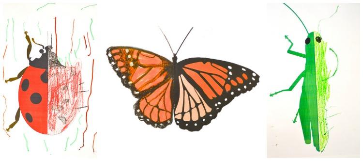 Drawn bug entomology In Art Missing the Box