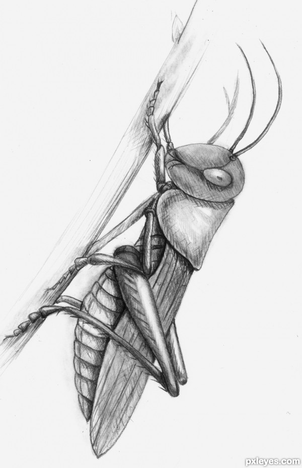 Drawn bugs sketch Get Insects 1  Realistic