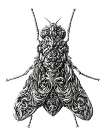 Drawn insect realistic Art Best Insect Realistic Drawing