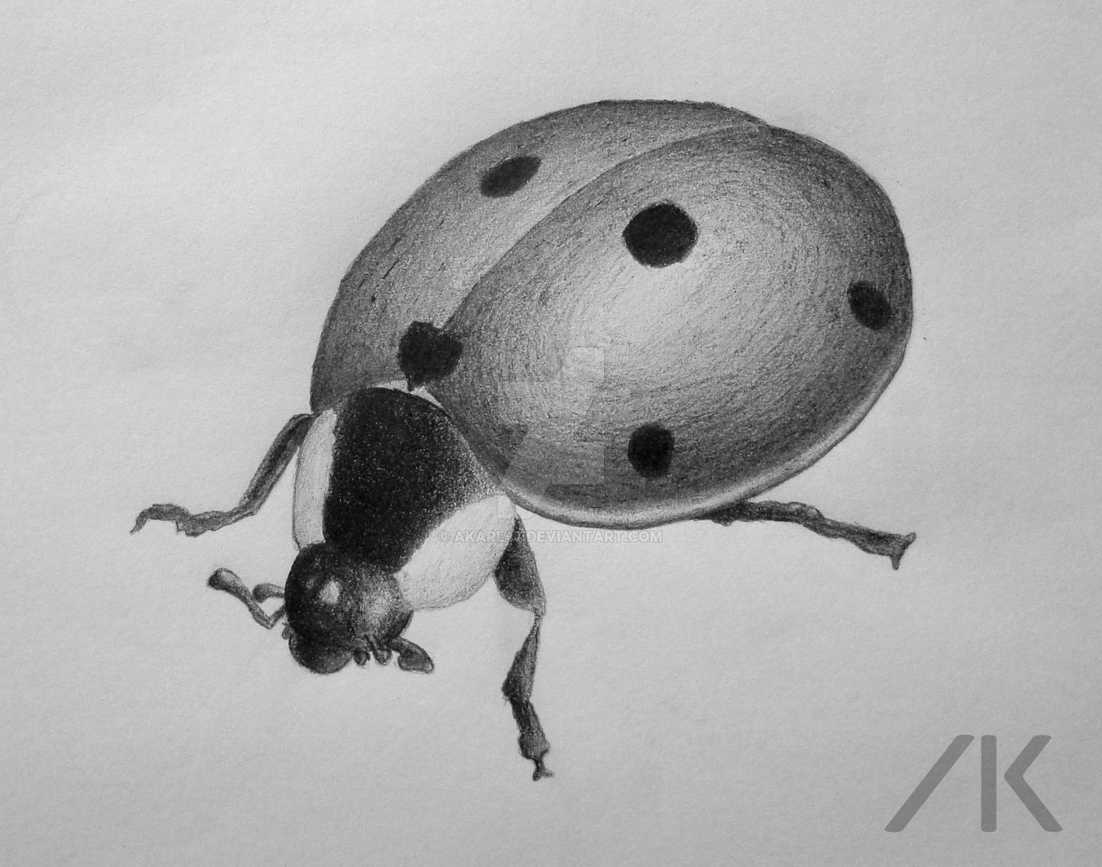 Drawn insect realistic Pencil Ladybug pencil Ladybug AKarl47