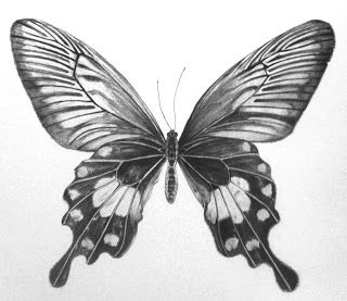 Drawn insect realistic 25+ By Drawings Butterfly drawings