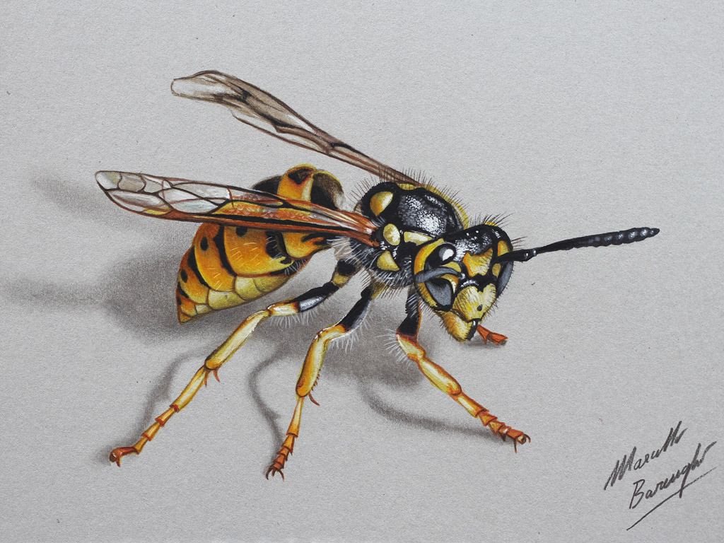 Drawn insect realistic Realistic on this Find [