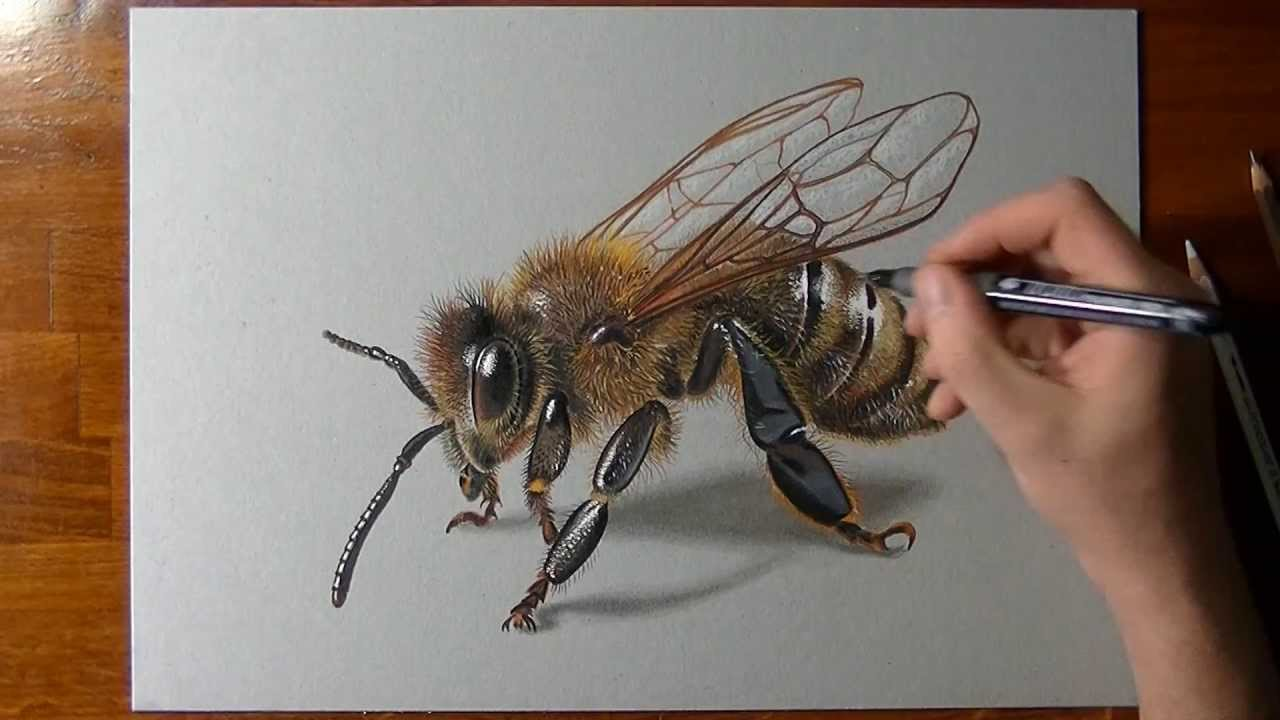 Drawn insect realistic 3D How  a YouTube