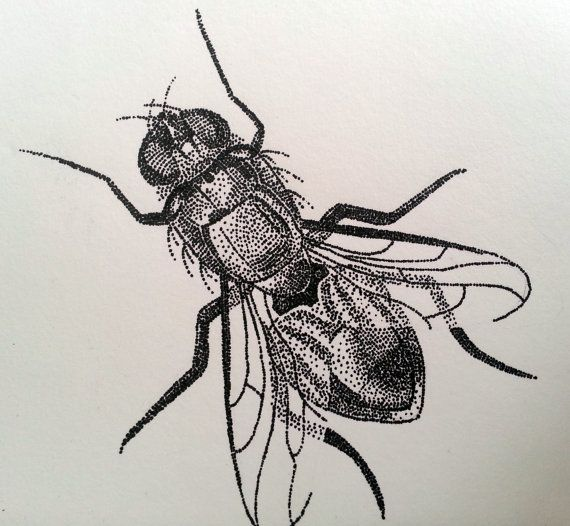 Drawn bugs dotwork Pointillism Bug best Insect 351