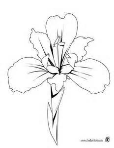 Drawn iris Iris of irises Images Pinterest