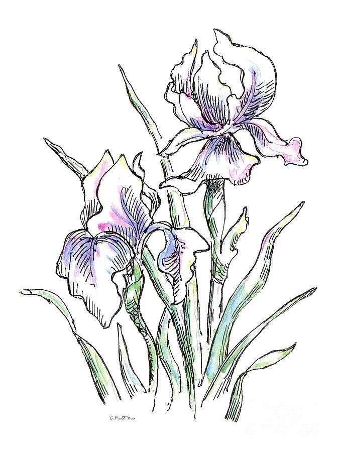 Drawn iris Iris Pencil Images Drawing Iris