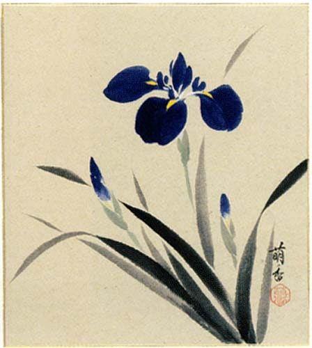 Drawn iris Best on Pinterest Iris images