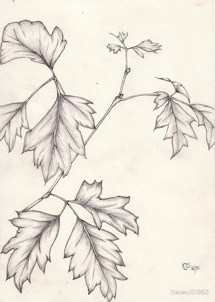 Drawn ivy ivy leaf Grape by by Ivy Drawing